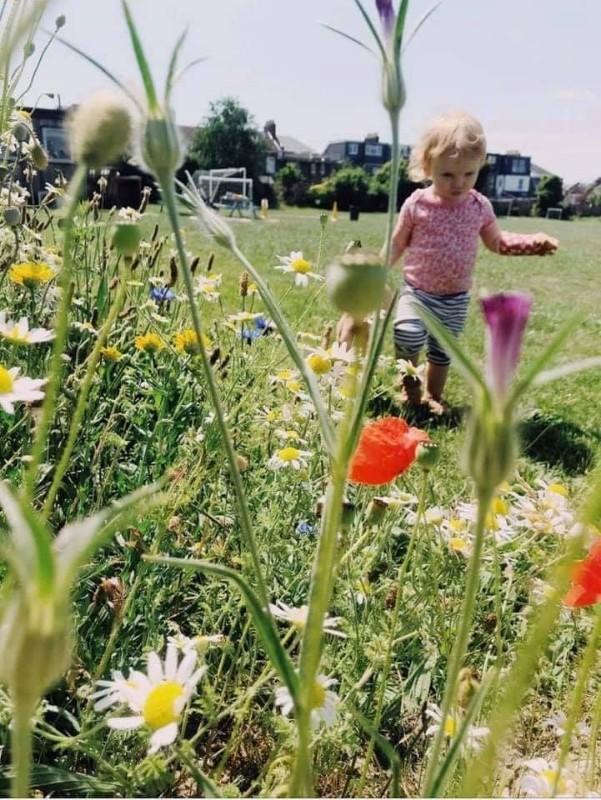 Abbotshall-daisies