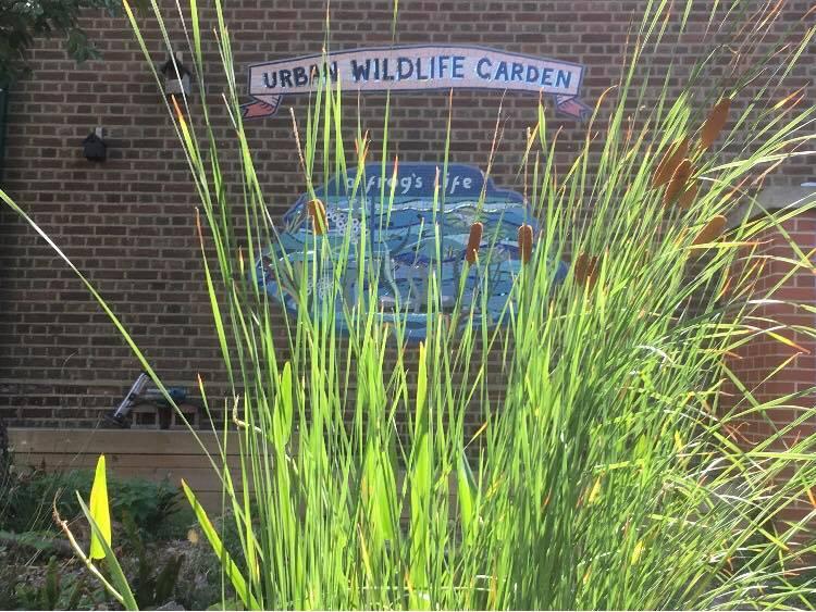 Abbotshall-wildlife-garden